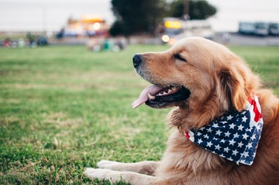 How to use your dog as a lawyer: What are the legal issues?